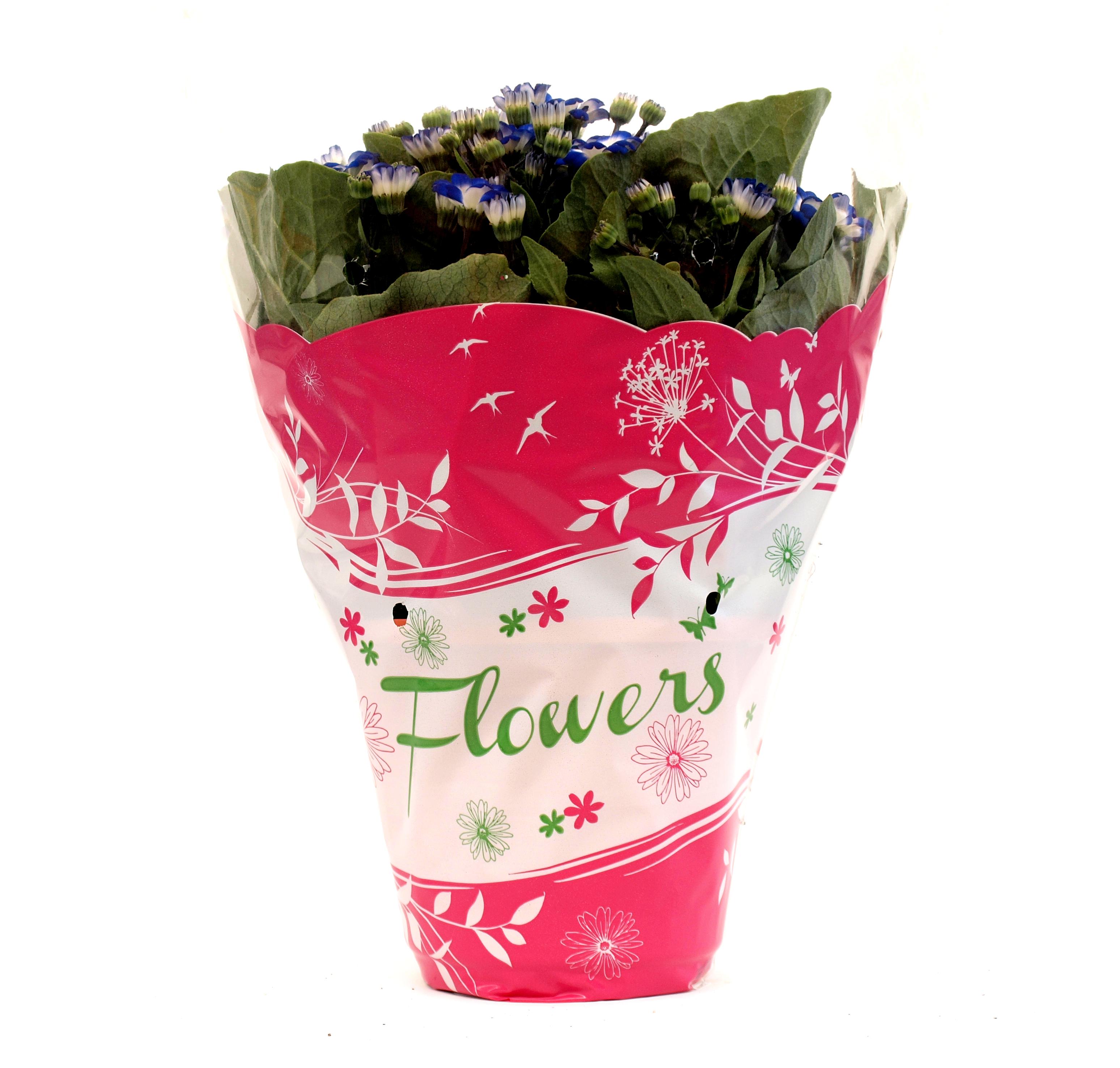 Flowers_fucsia
