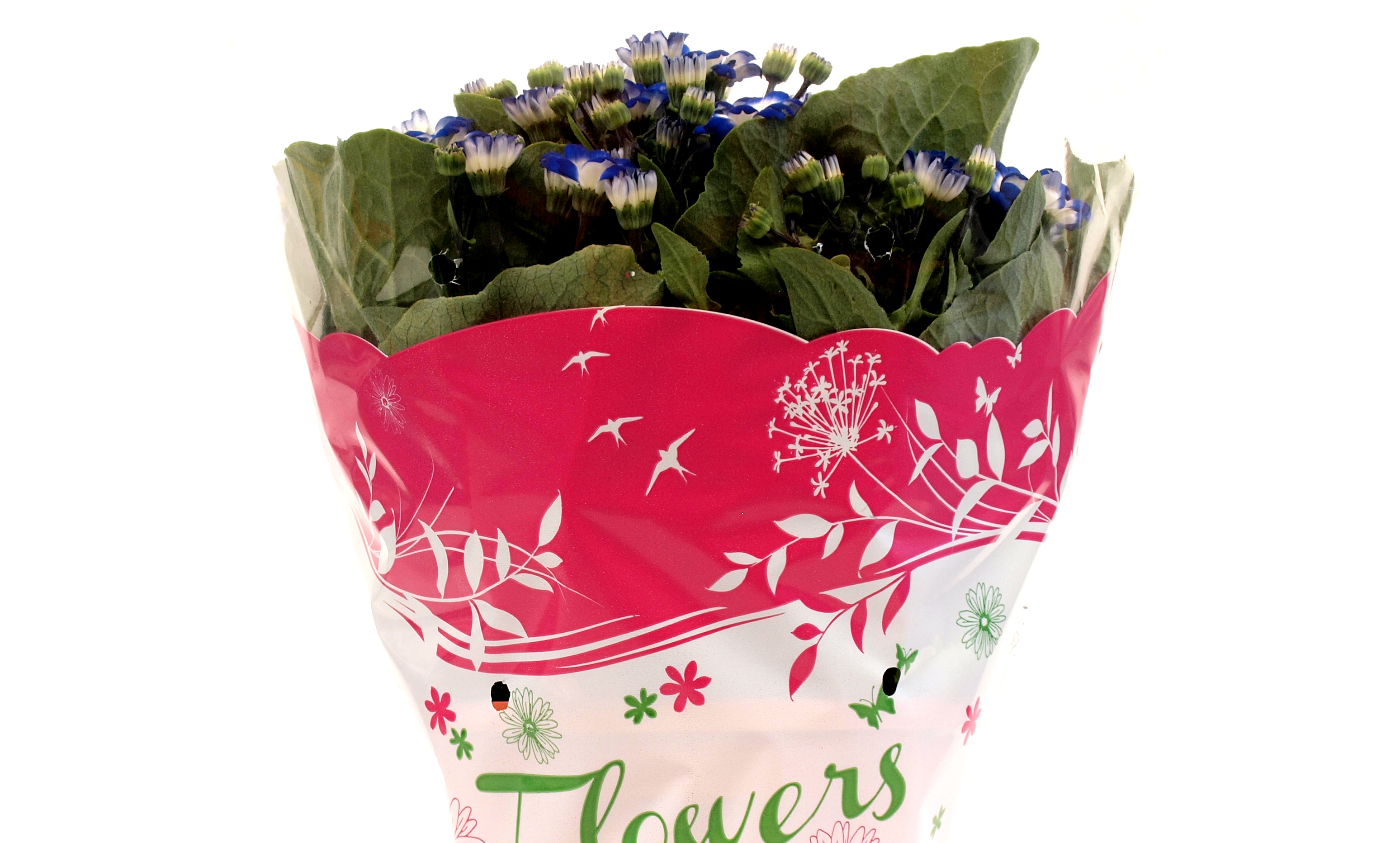 Flowers_fucsia_dett