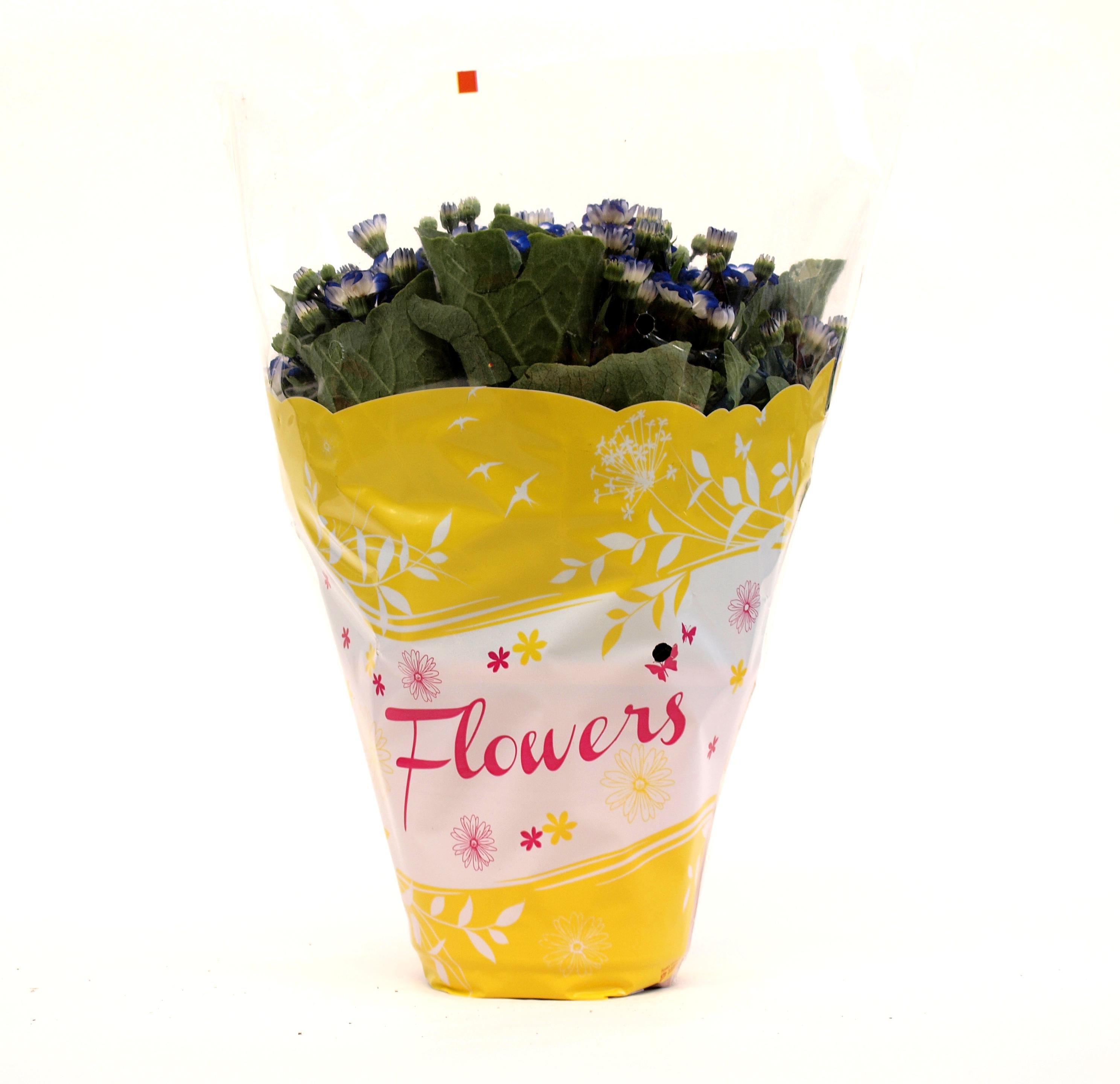 Flowers_giallo