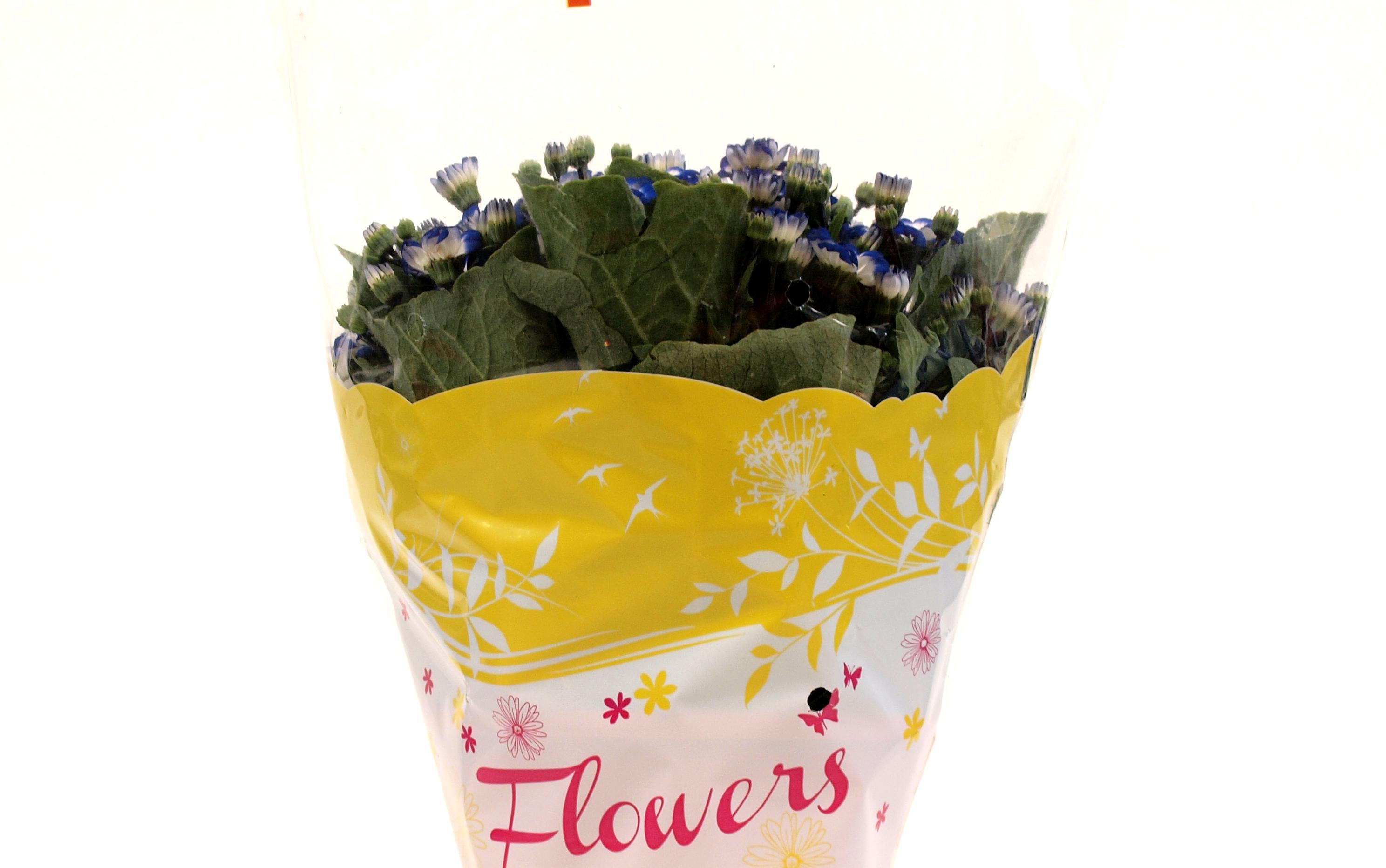 Flowers_giallo_dett