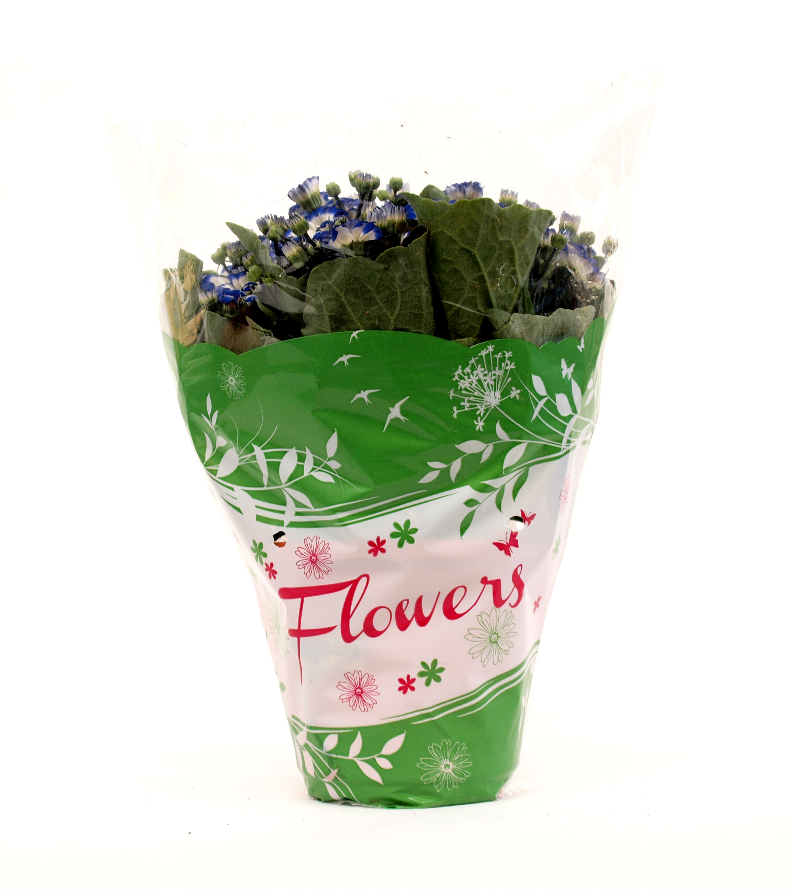 Flowers_verde